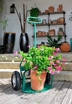 Try out Potwheelz plant dolly at trade shows.